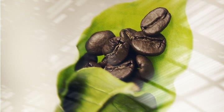 illy® - Мляно кафе - Classico, без кофеин - 250 гр - Детайли 2