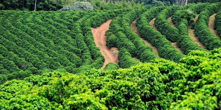 illy® кафе на зърна - Arabica Selection Бразилия - 250 гр - Детайли 2